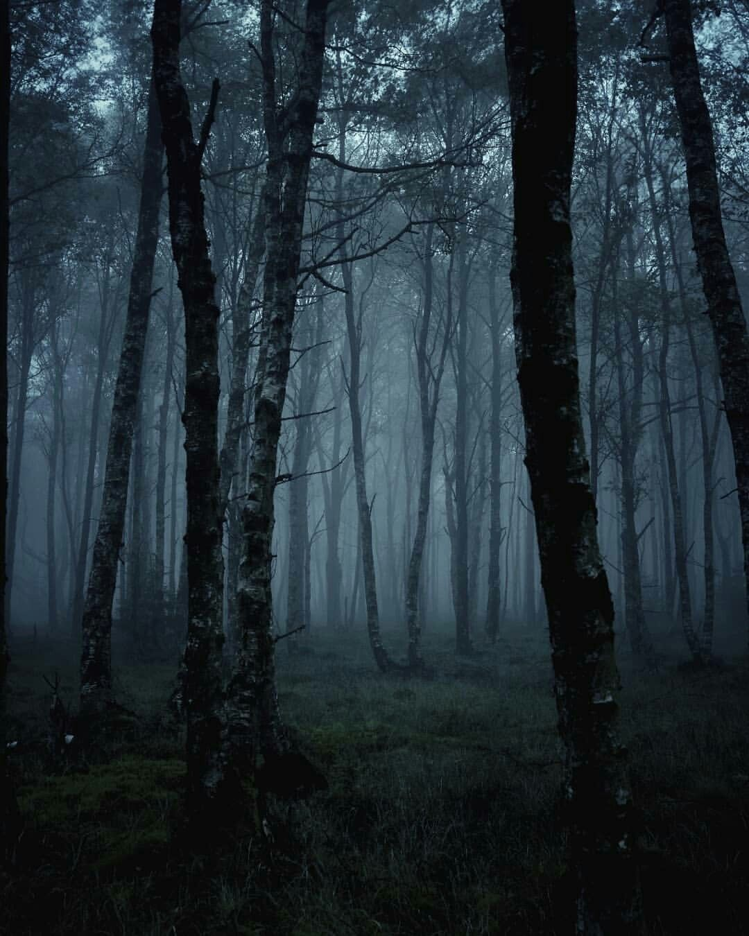 Dark Woods Dark Landscape Forest Photography Nature Photography
