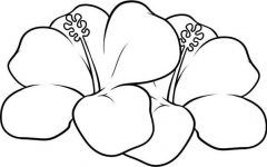 interesting hawaiian flower coloring pages gallery - Hawaiian Flower Coloring Pages