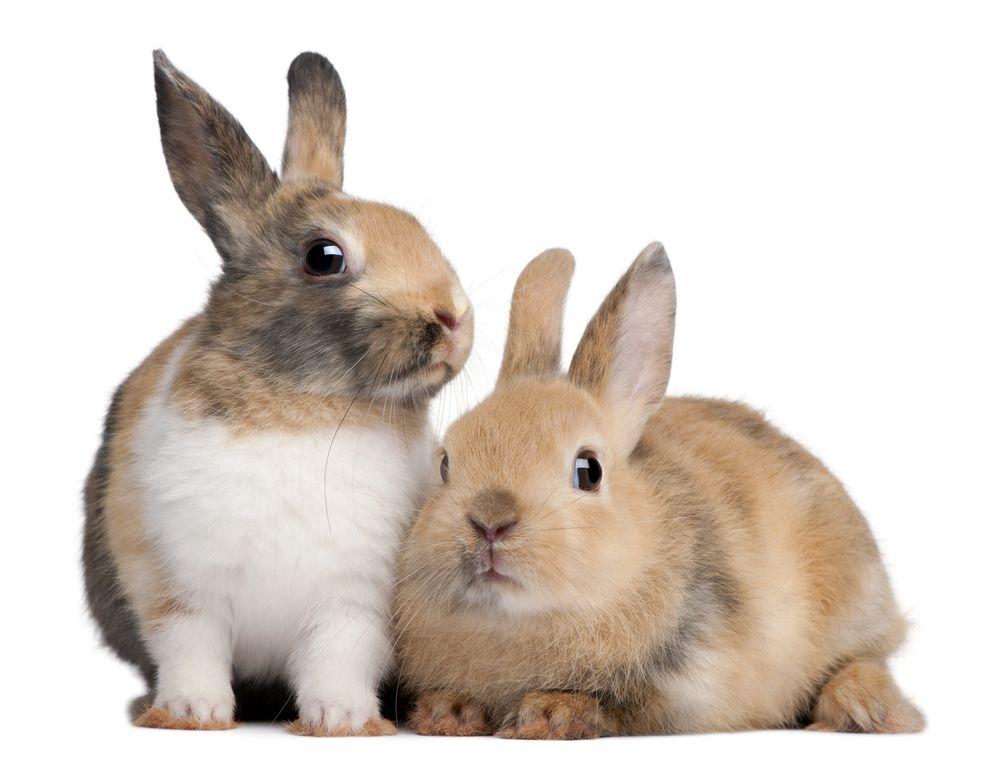 Comment fabriquer un clapier à lapin? Meubles en bois de palette