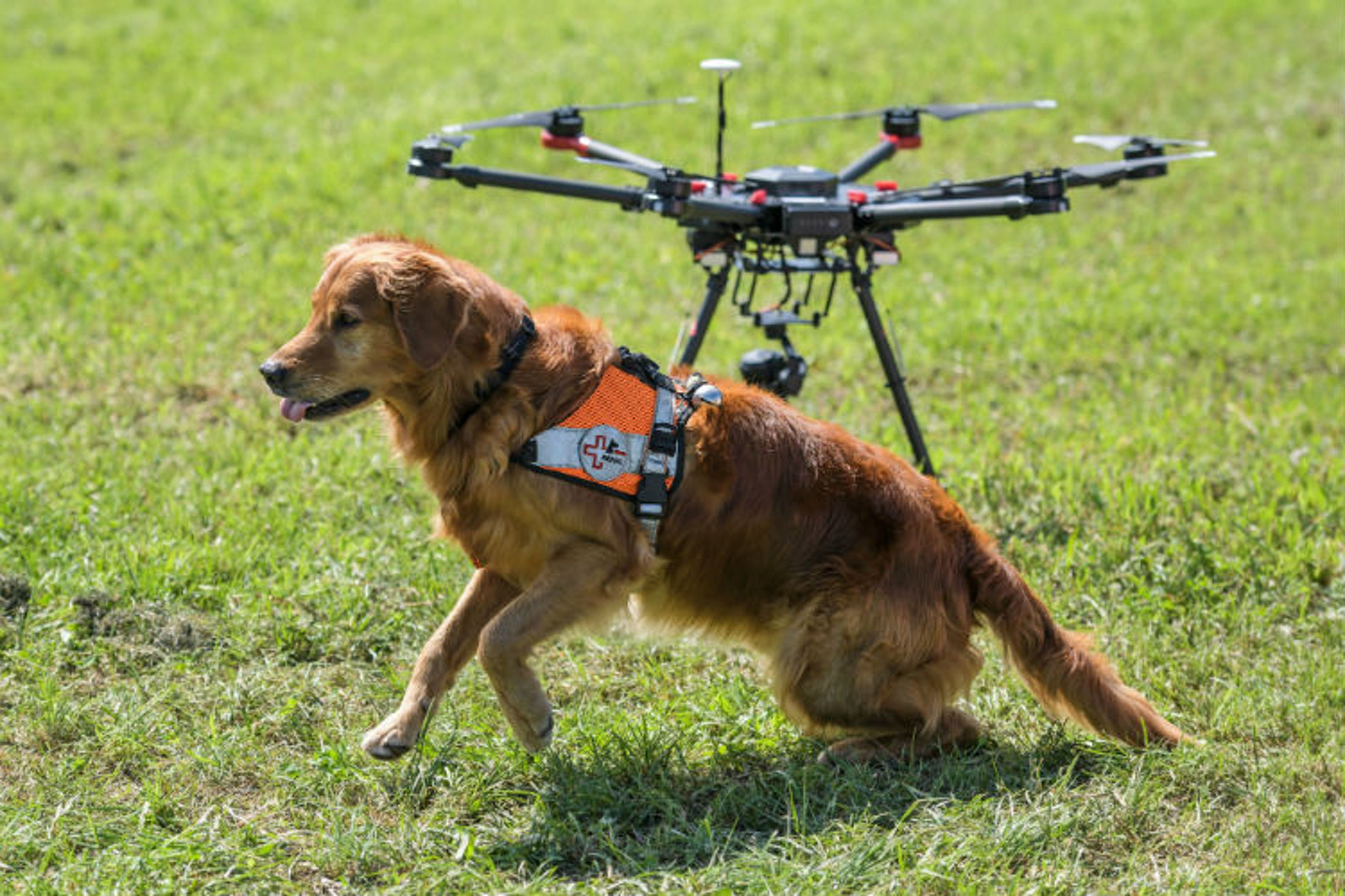 How Dogs And Drones Are Slashing Rescue Times In Thewake Of