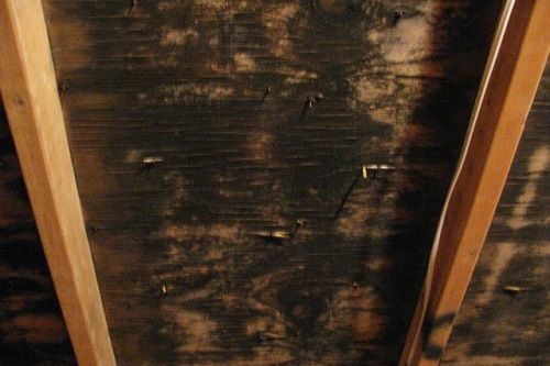 Surviving Mold In Your Attic Get Rid Of Mold Diy Molding Molding
