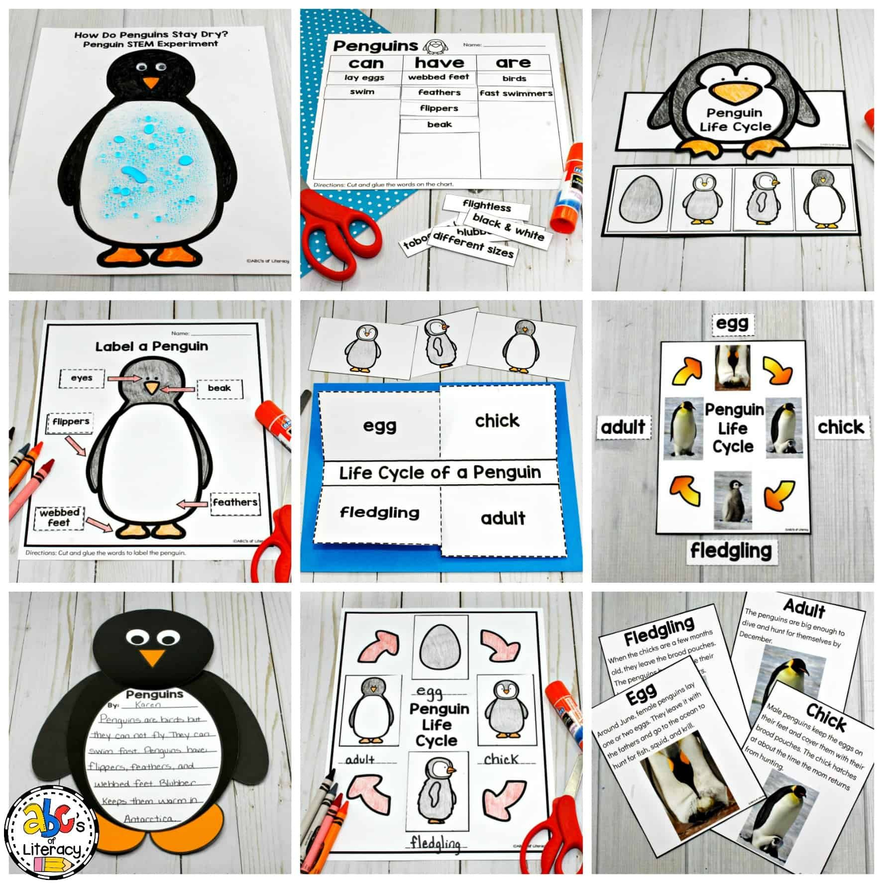 How Do Penguins Stay Dry Penguin Science Experiment In 2020 Penguin Activities Science Experiments Penguin Life Cycle