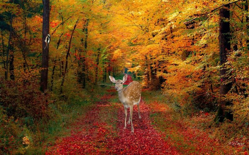 Hd Autumn Deer Wallpaper Lost In The Woods Fall Pictures Autumn Leaves Wallpaper