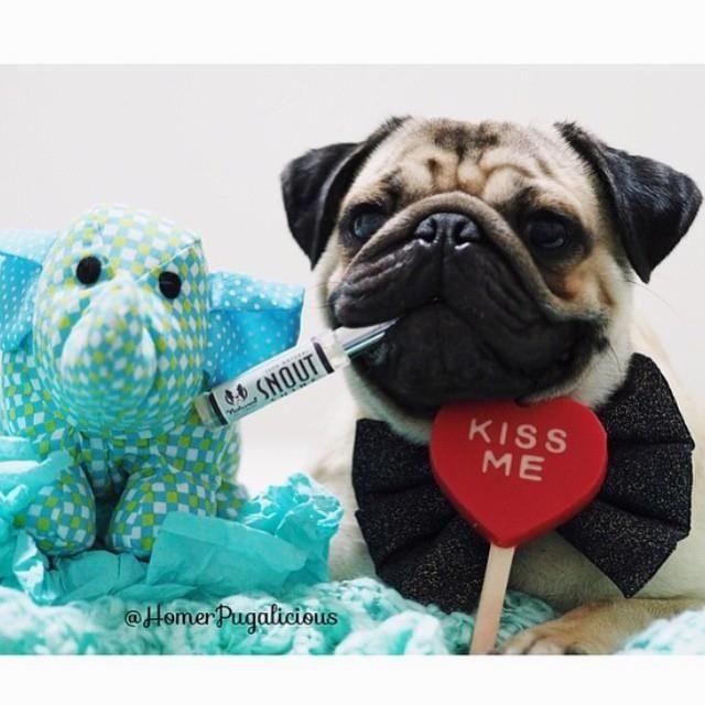 Gambar Oleh Puppydoglove Pada Dog Puppy Love