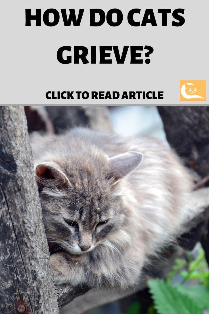 How Do Cats Grieve Cats, Cat behavior, Cat facts