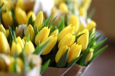 Winter 2018 collection the meaning of yellow tulips has evolved winter 2018 collection the meaning of yellow tulips has evolved somewhat from once representing mightylinksfo
