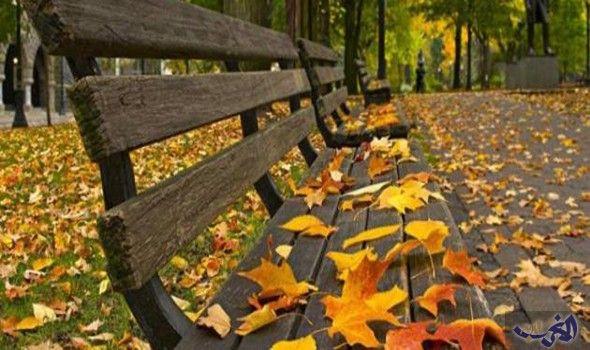 أدوات مهمة لقضاء فصل الخريف بدون مشاكل مع الفناء الخارجي Park Bench Canvas Wall Art Autumn Park