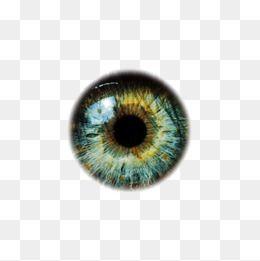 Eye Eyeball Eye Material Eyes Eye Free Png Material Free Png Eyeballs Clipart Photo Background Images Photoshop Digital Background Studio Background Images