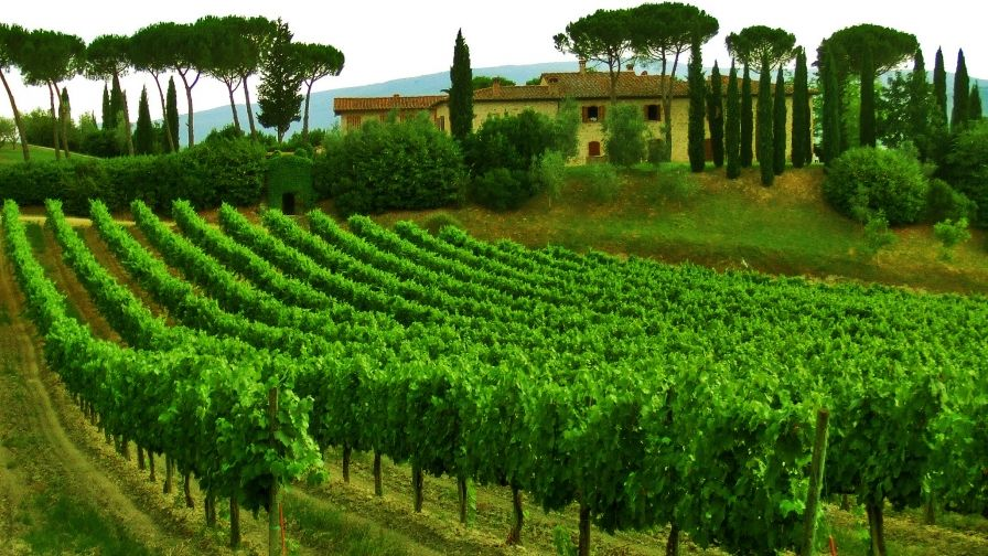 Vineyard Italy Wallpaper Download Hd Collection