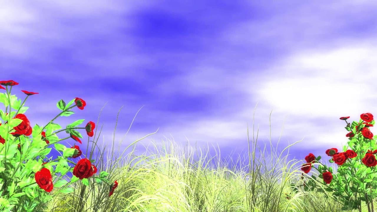 Free Download Hd 1080p Video Backgrounds 3d Animated Red Roses