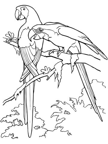 hellrote aras, pärchen ausmalbild | malvorlagen tiere, ausmalen und malvorlagen für kinder