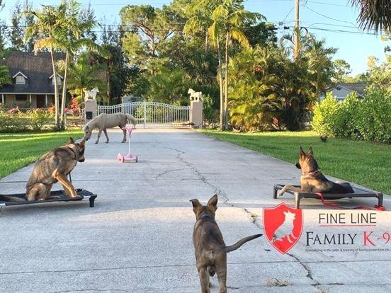 Dog Training Los Angeles Dog Training Nwa Robert Cabral Dog
