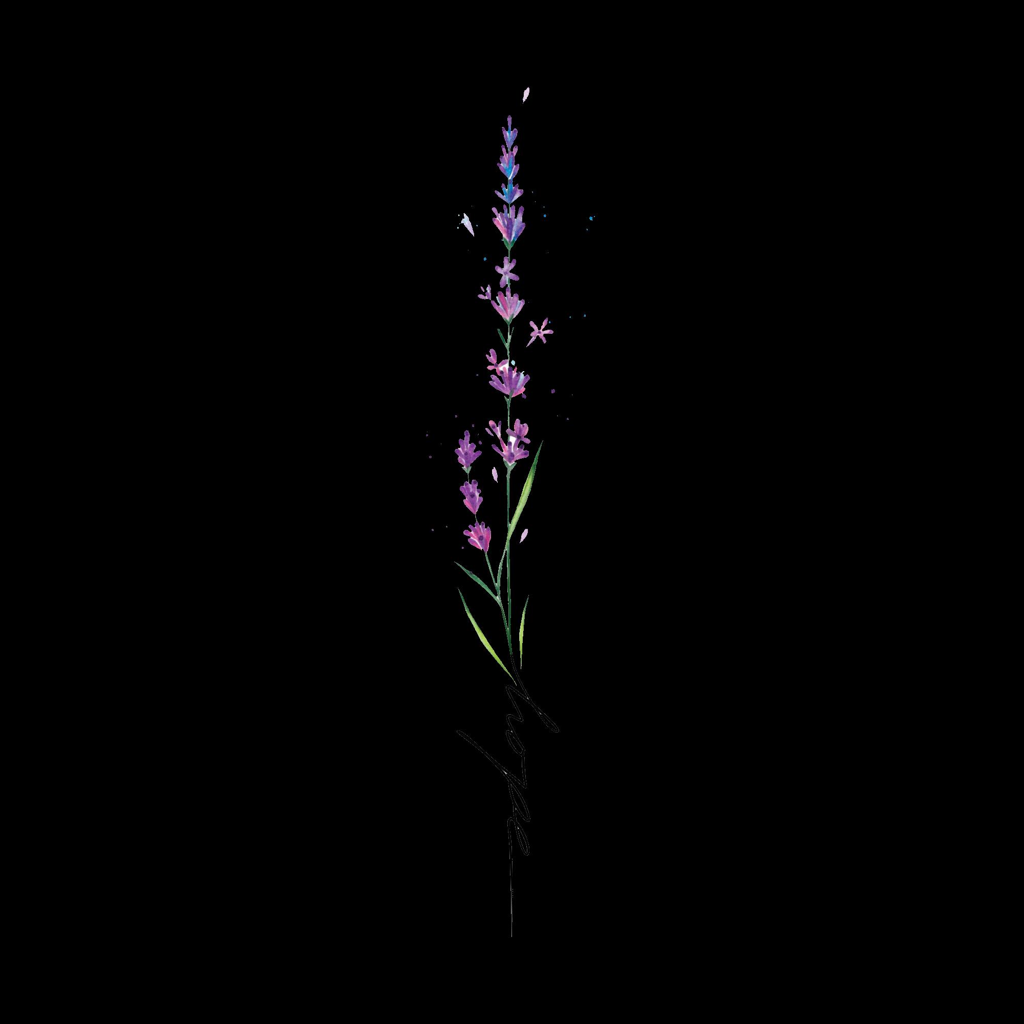 длинный цветок рисунок что