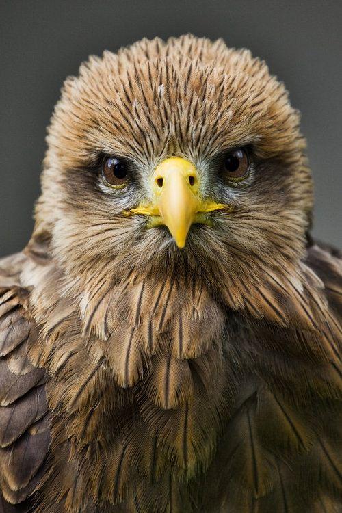 Precious!! Juvenile Eagle ... #PleaseComeCloser  Zoom In - Close Up -Animals