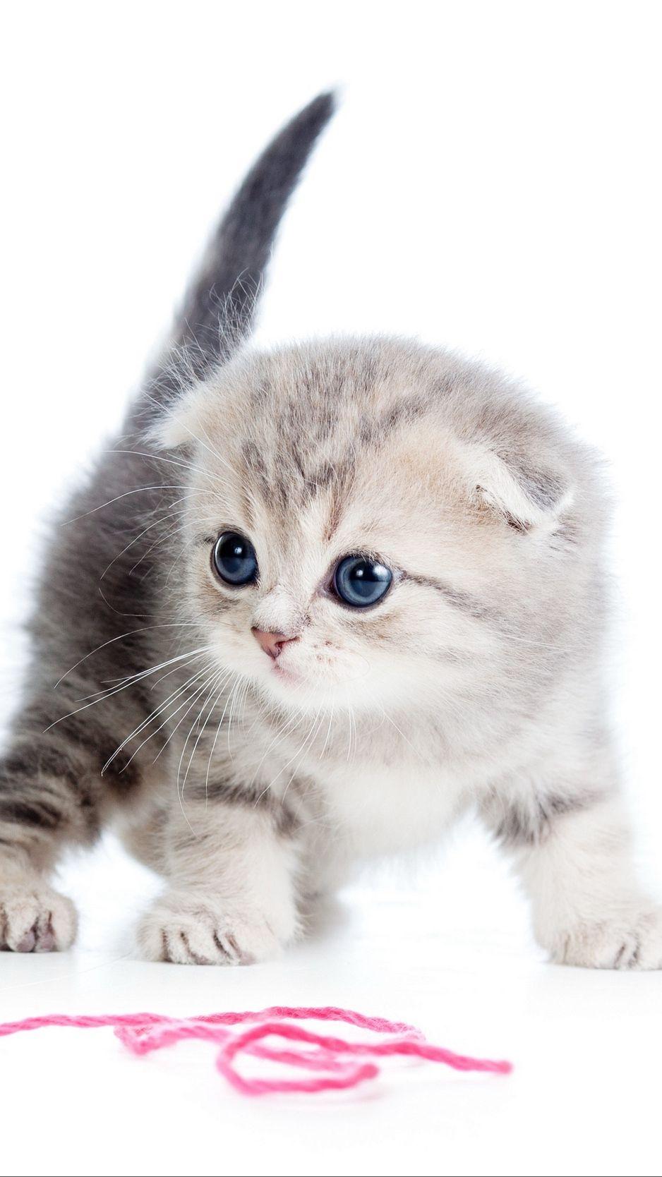 Pin On Bebe Animalitos