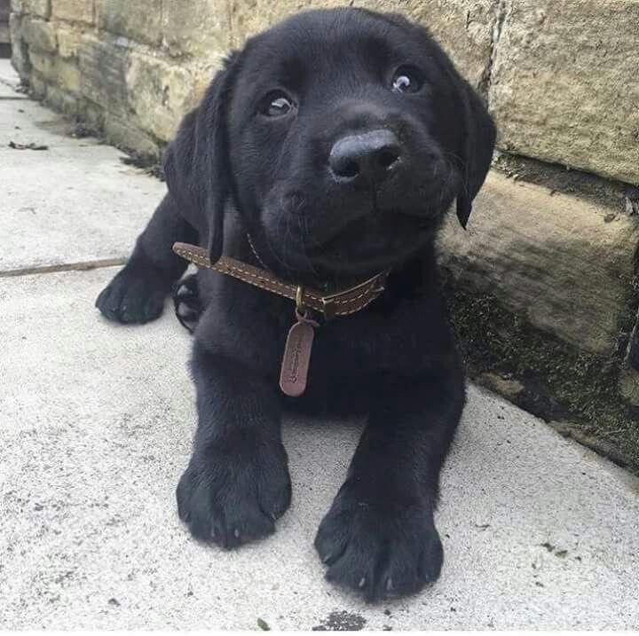Pin By Morgan Hinton Moreno On Animals Cute Animals Puppies Cute Dogs