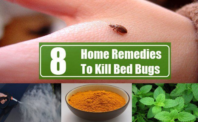 Home Remedies To Kill Bed Bugs Bed Bugs Bed Bug Remedies