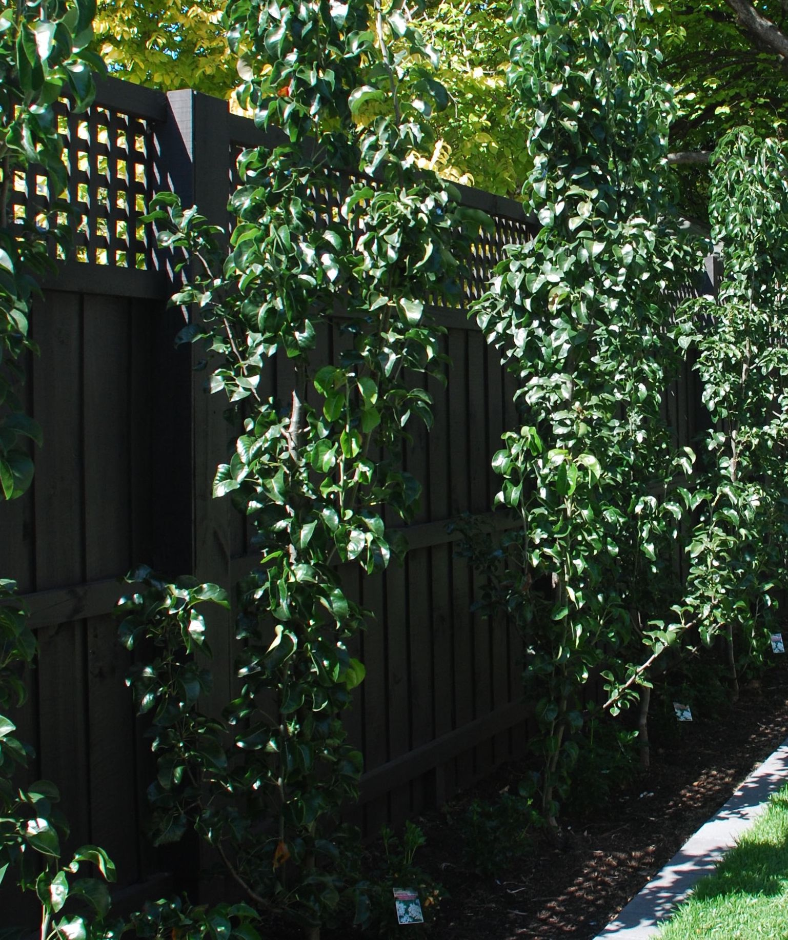 Dulux Namadji Paint Colour Outdoor Fencing Fence Paint House Painting