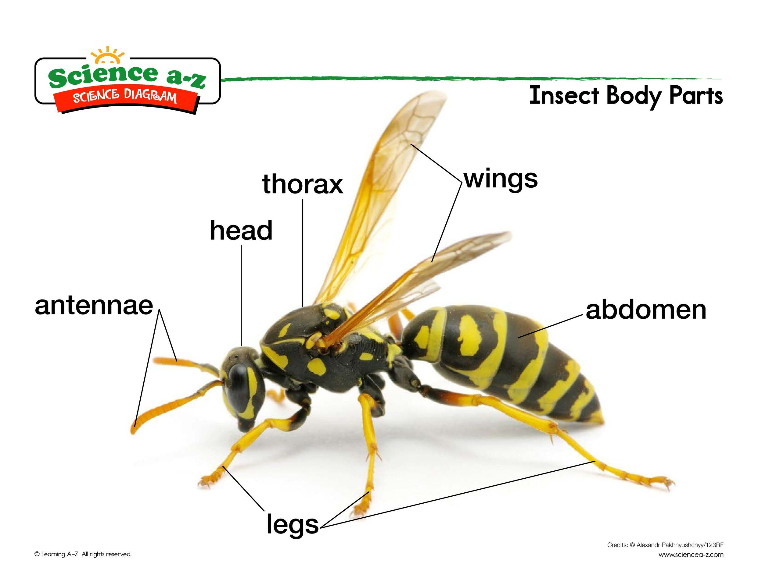 Insect Body Parts Science - Insects