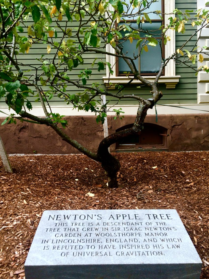 descendant of sir isaac newton s apple tree growing at brown descendant of sir isaac newton s apple tree growing at brown university in 2016