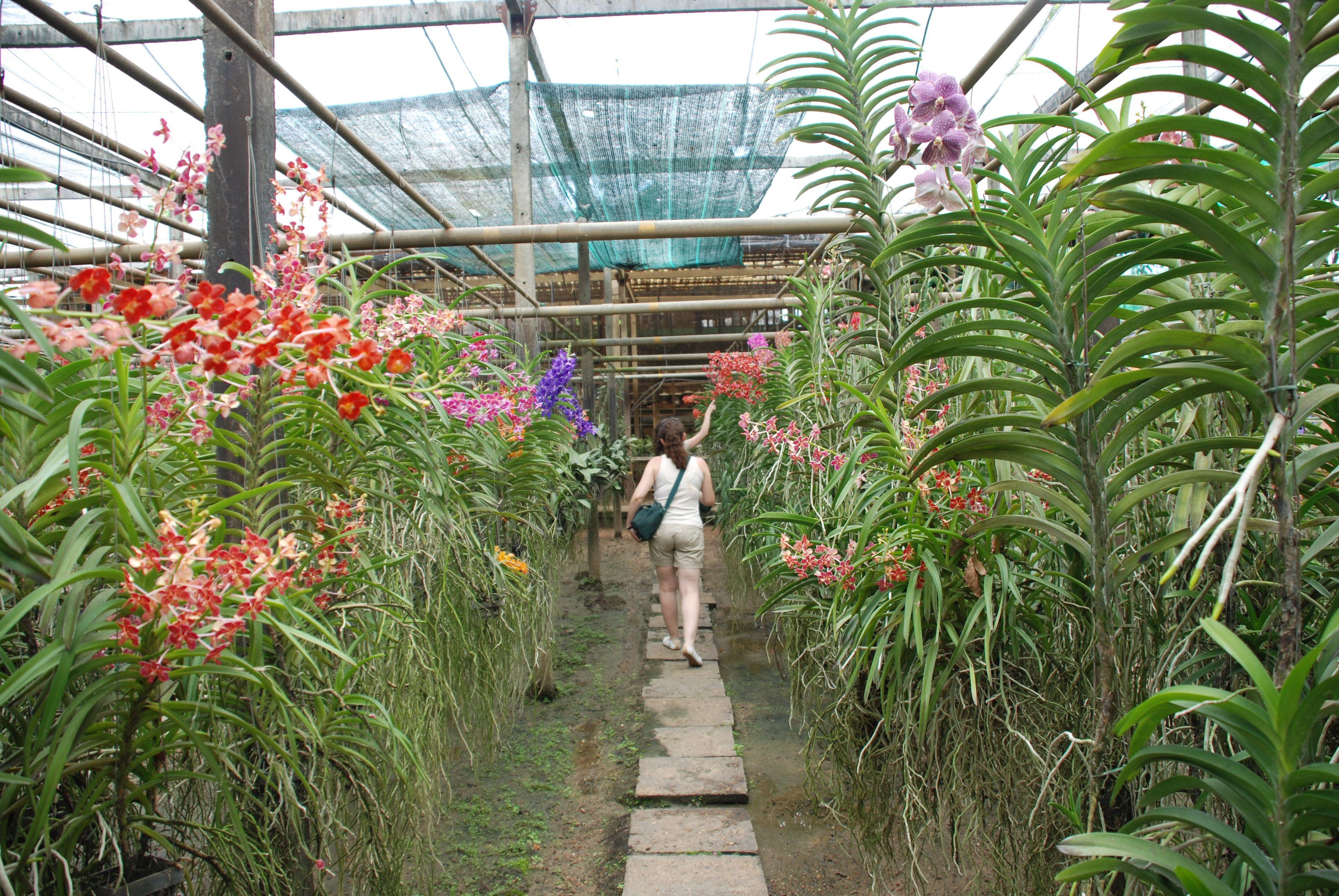 Invernadero las ra ces de las plantas est n al aire libre Plantas de invernadero
