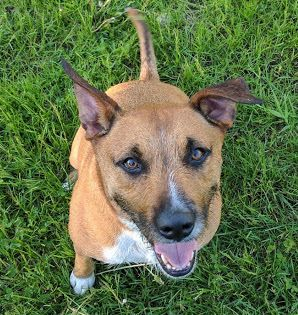 Adopt Taylor on Black mouth cur, Adoption, Dogs