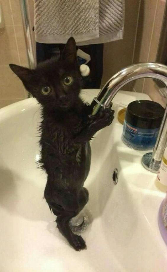 This kitty sure does love water!