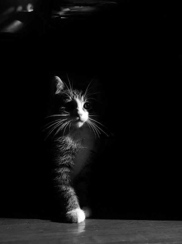 Cool černá kočička