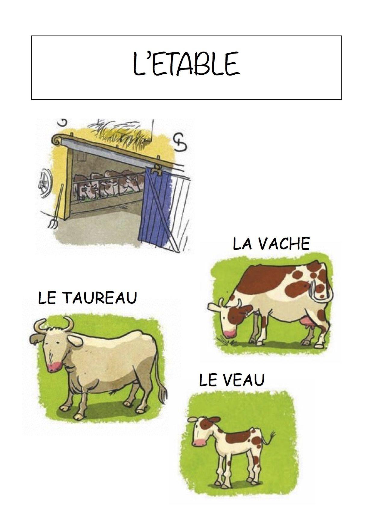 Vocabulaire de la ferme Imagier simple pour la maternelle : L'étable