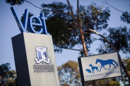 personal statement visa documents      The University of Sydney