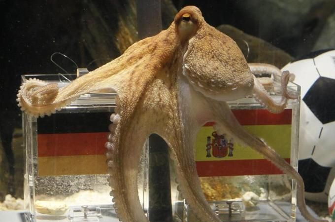 Predicting The Future With Big Data Paul The Octopus Octopus Creature Feature