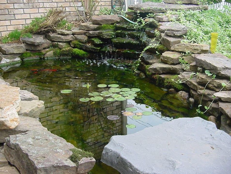 Pretty and small backyard fish pond ideas at decor for Koi pond designs south africa