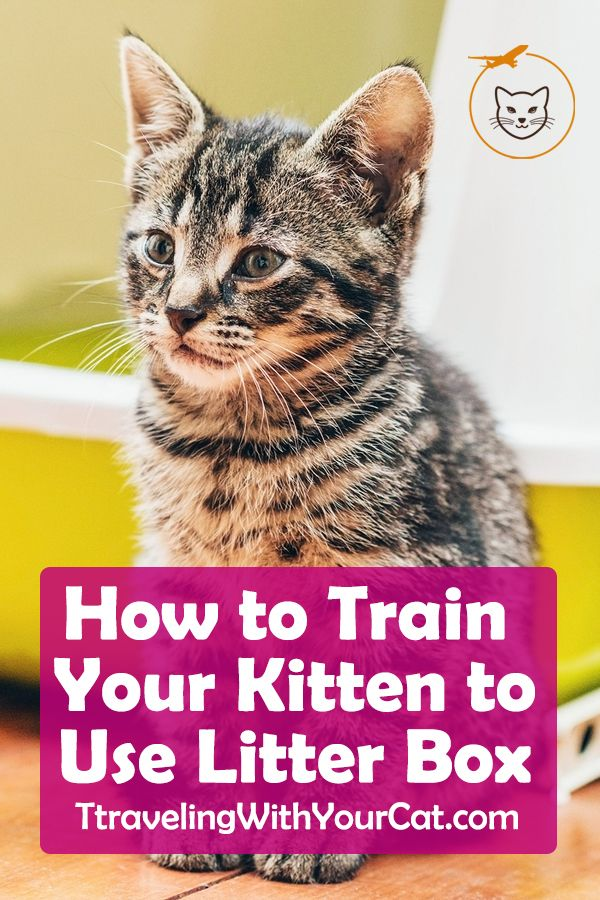 Everything You Need To Know About Litter Training Your Cat Or Kitten With Images Litter Training Training A Kitten Litter Box Training Kittens