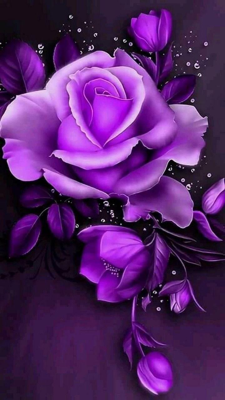 Bellezas de la naturaleza | Purple flowers wallpaper, Purple roses  wallpaper, Purple roses