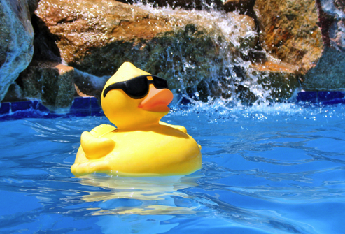 Image result for pool duck nasa