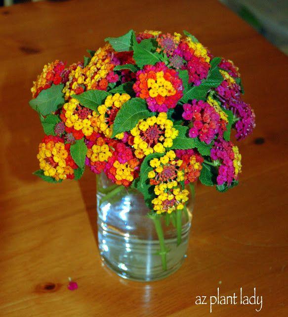 Ramblings From A Desert Garden A Celebratory September Mgd Desert Garden Flower Arrangements Lantana