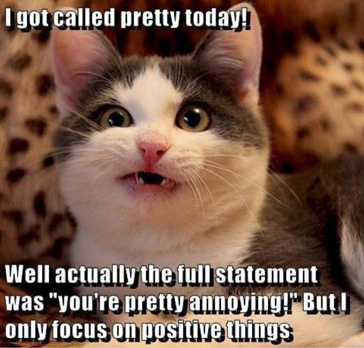 kitty is pretty! Funny christian memes, Funny cats