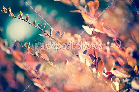 Осенний кленовый лист на листья фон — Стоковое фото © M ...