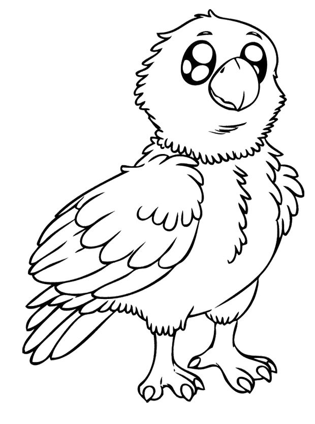 Baby Eagle Coloring Pages Kids Coloring Pages Pinterest Eagle