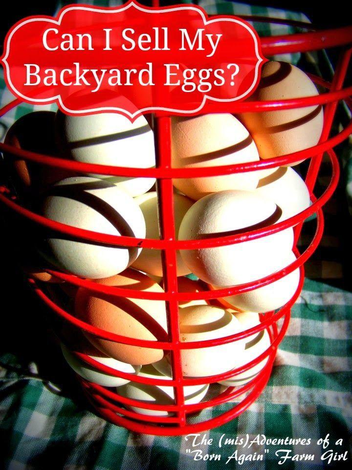 """The (mis)Adventures of a """"Born Again"""" Farm Girl: Ask the Farm Girl: Can I Sell My Backyard Eggs?"""