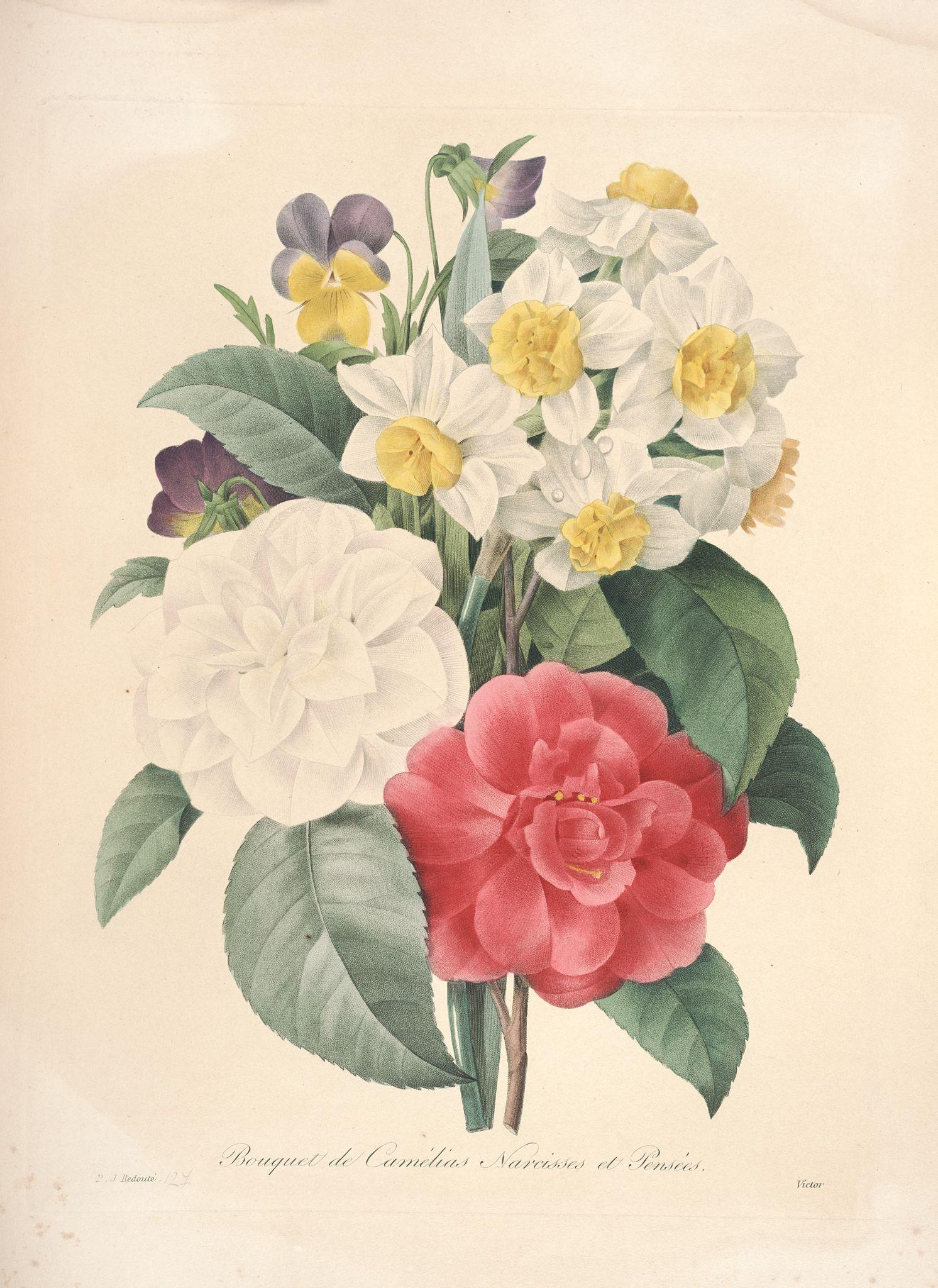 Gravures de fleurs par redoute 151 bouquet de camelias for Botanic fleurs artificielles