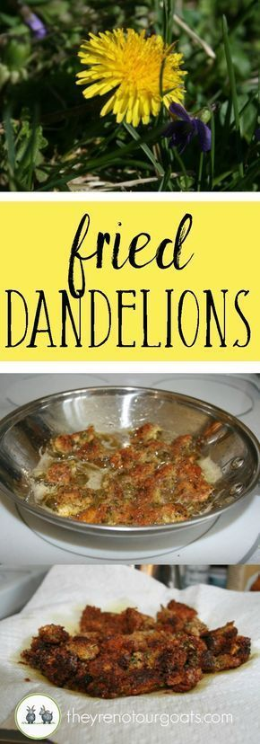 Fried Dandelion Heads They Re Not Our Goats Dandelion Recipes Foraging Recipes Wild Food Foraging
