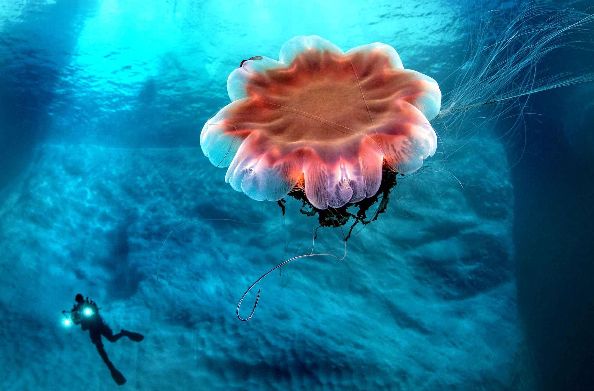 новое оборудование странные медузы фото удивительно