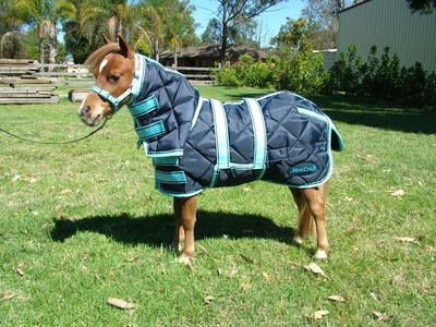 Minicraft Dooner Combo Navy Light Blue Miniature Horse Rugscombo