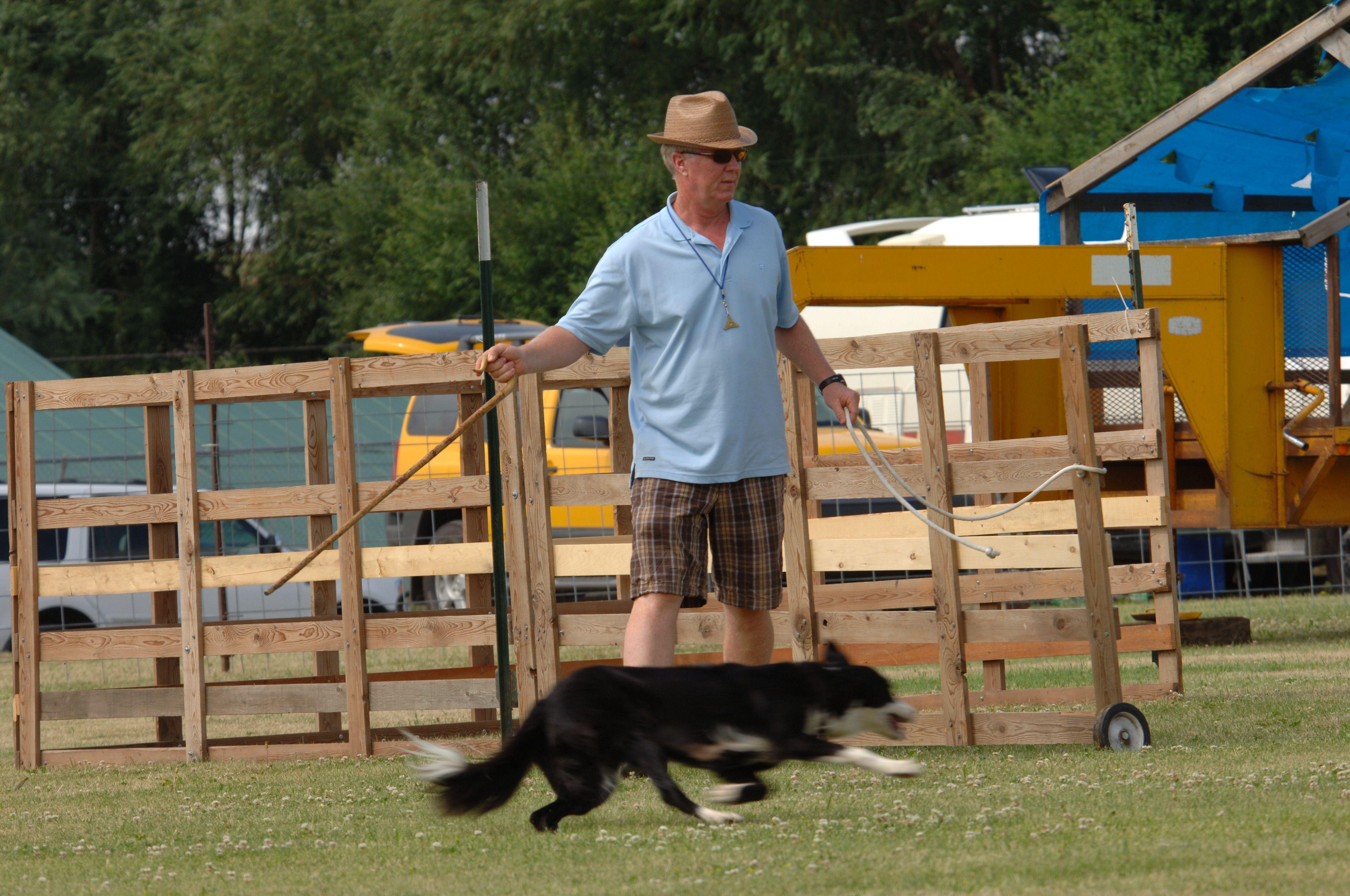 Patrick Shanahan Athena Oregon Sheep Dog Trials With Images
