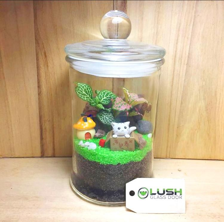Tova Fittonia Story Jar Terrarium By Lush Glass Door Succulent