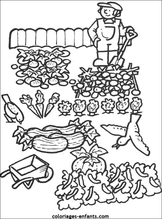 coloriages du potager