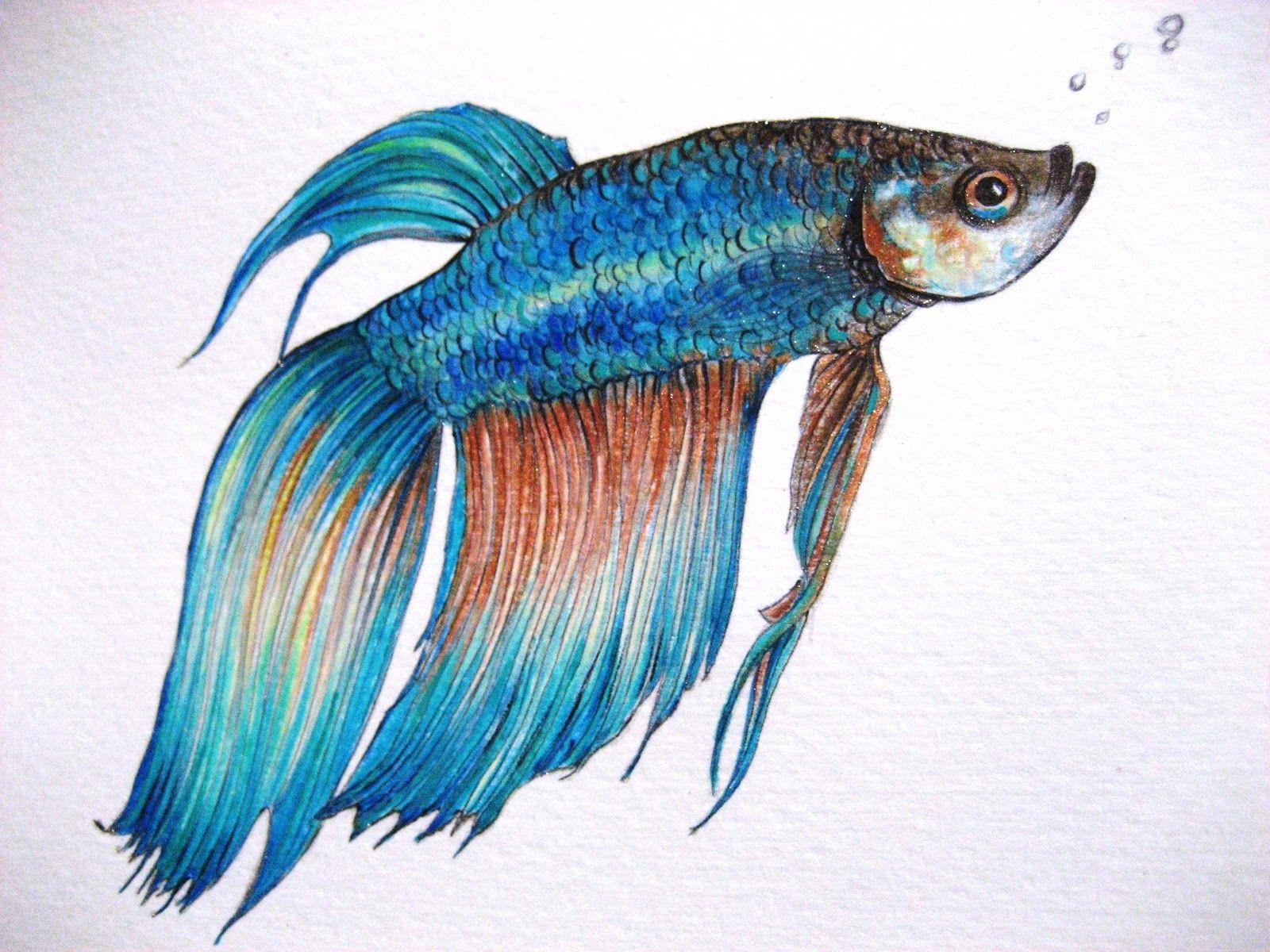 betta fish drawing - Google Search | Fish drawings, Betta ...