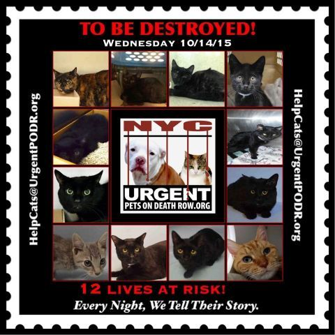 To Be Destroyed 10 14 15 Info To Be Destroyed Click For Info