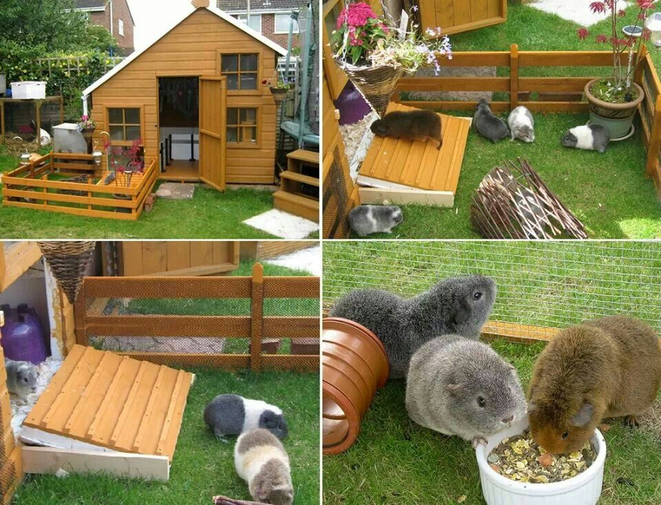Guina pig and other small animal funfun land on pinterest for Outdoor guinea pig cage